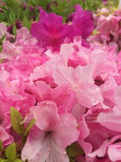花々に囲まれての写真・画像素材[2079629]