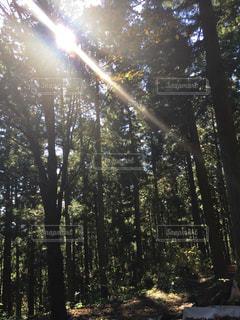 フォレスト内のツリーの写真・画像素材[1794428]