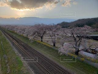 桜並木の写真・画像素材[1990966]
