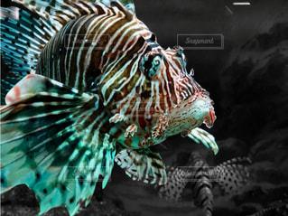 近くに魚のアップの写真・画像素材[1801208]