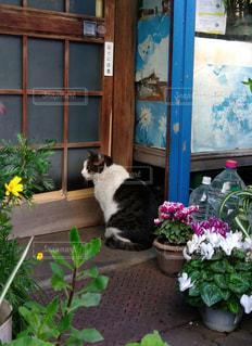 軒先に座っている猫の写真・画像素材[1790765]