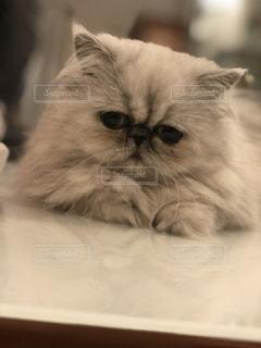 可愛い猫の写真・画像素材[2272604]