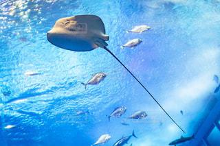 水面下を泳ぐ魚たちの写真・画像素材[1793870]