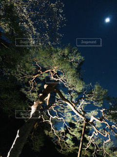 松の木と月の写真・画像素材[1873579]