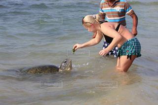 亀に餌をあげる人の写真・画像素材[1796734]