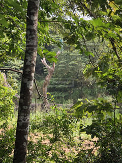 ジャングルの写真・画像素材[1797731]