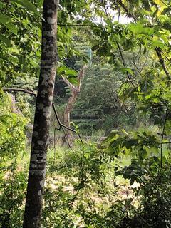 ジャングルの写真・画像素材[1797732]