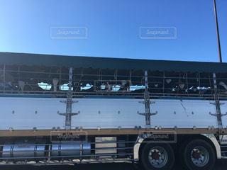 輸送中の牛の写真・画像素材[2383572]