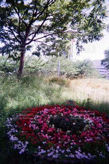近くのフラワー ガーデンの写真・画像素材[1853124]