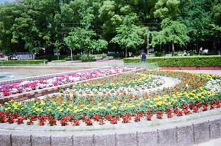 公園の花壇の写真・画像素材[1853447]