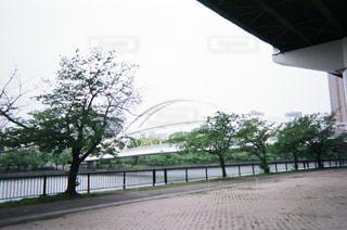 白い橋の写真・画像素材[1853466]