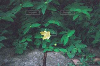 近くの緑の植物をの写真・画像素材[1853540]