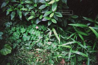 庭の写真・画像素材[1853571]