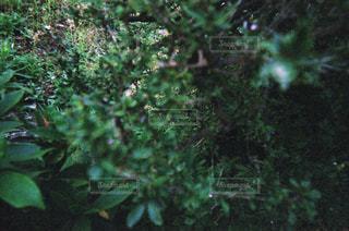 茂みの写真・画像素材[1853586]