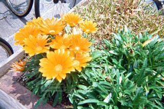 花の写真・画像素材[1994630]