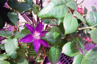 花の写真・画像素材[1994641]
