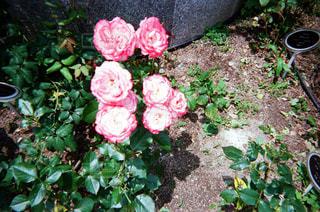 花の写真・画像素材[1994663]