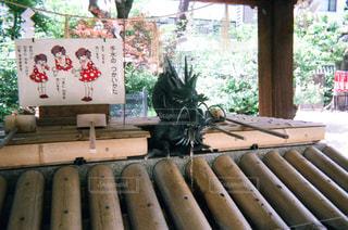 龍の写真・画像素材[1994673]