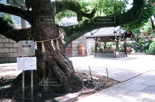 神社の写真・画像素材[1994699]