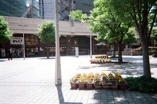 夏の写真・画像素材[1994706]