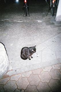 猫の写真・画像素材[1994711]