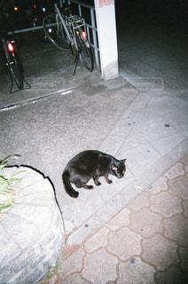 猫の写真・画像素材[1994713]