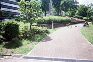 公園の写真・画像素材[1994738]