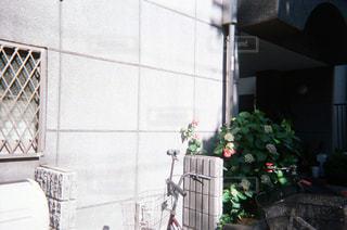花の写真・画像素材[1994740]