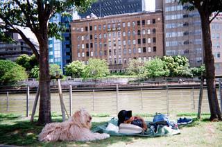 犬の写真・画像素材[1994769]