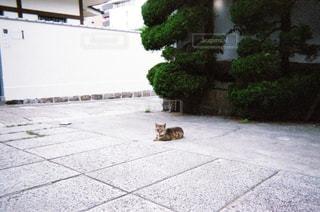 猫の写真・画像素材[1998386]