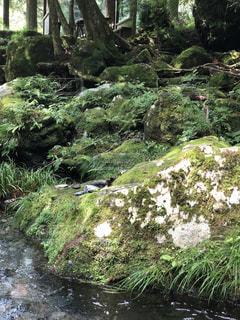 森林浴の写真・画像素材[1804364]