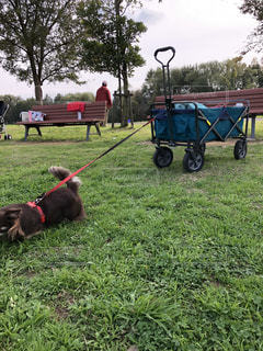 草の中に座っている犬の写真・画像素材[1800453]