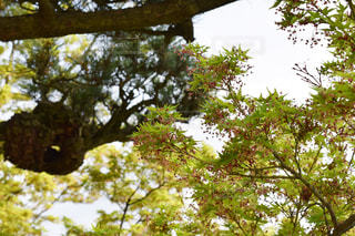 水戸市 偕楽園の木の写真・画像素材[2118195]