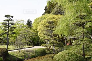 水戸市 偕楽園の緑の写真・画像素材[2118196]