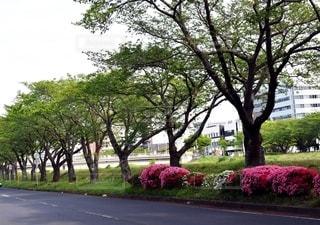 茨城県水戸市の道路脇の木の写真・画像素材[2724298]