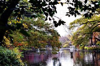 東京 井の頭公園の紅葉の写真・画像素材[2785498]