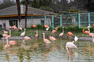 東武動物公園のフラミンゴの写真・画像素材[2789045]