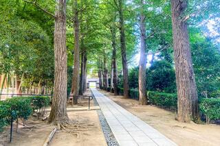 木に囲まれた道の写真・画像素材[3650819]