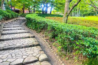 公園の石段の写真・画像素材[3650821]