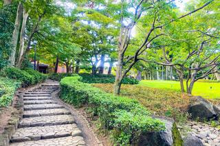 公園の石段と芝生の写真・画像素材[3650823]
