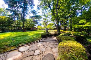 夏の日本庭園の写真・画像素材[3650842]
