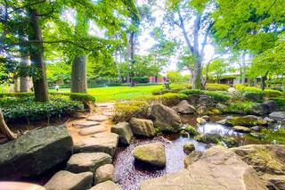 昼間の日本庭園の写真・画像素材[3650859]