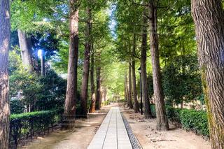 木に囲まれた歩道の写真・画像素材[3650862]