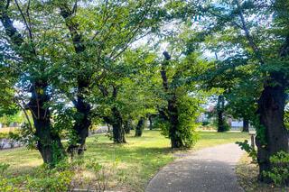 木々に囲まれた道の写真・画像素材[3650860]