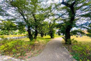 木々に囲まれた公園の写真・画像素材[3650868]