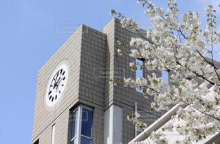 桜と学校の写真・画像素材[1840458]