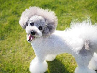 楽しそうな犬の写真・画像素材[1810726]