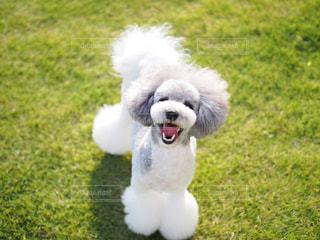 楽しそうな犬の写真・画像素材[1810727]