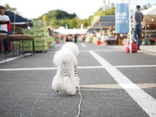 歩道の上を歩く犬の写真・画像素材[1810728]