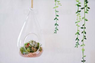 多肉植物の写真・画像素材[2011106]